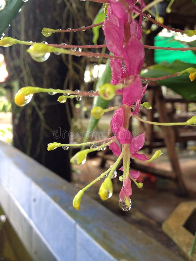 Globby kwiat obraz stock