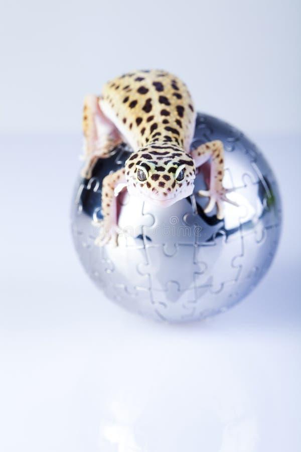 Globe dans le gecko images libres de droits