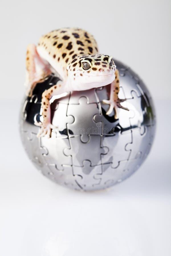 Globe dans le gecko photos libres de droits