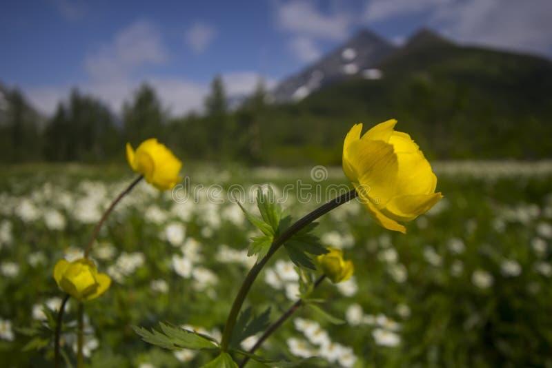Globe-fleur image libre de droits