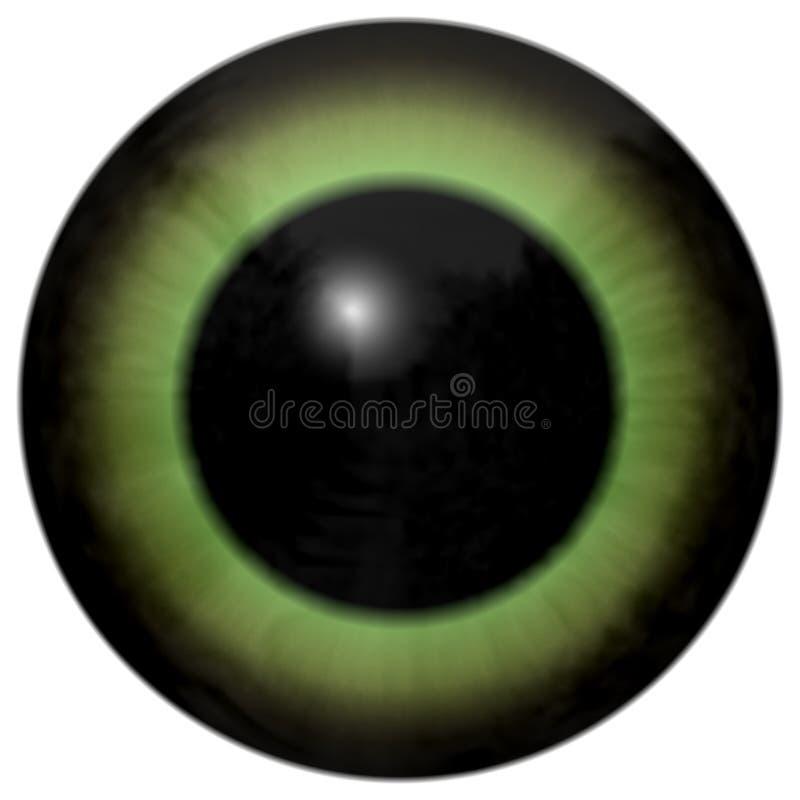 Globe oculaire humain vert avec le fond blanc, grand élève noir, oeil vert colorized illustration de vecteur