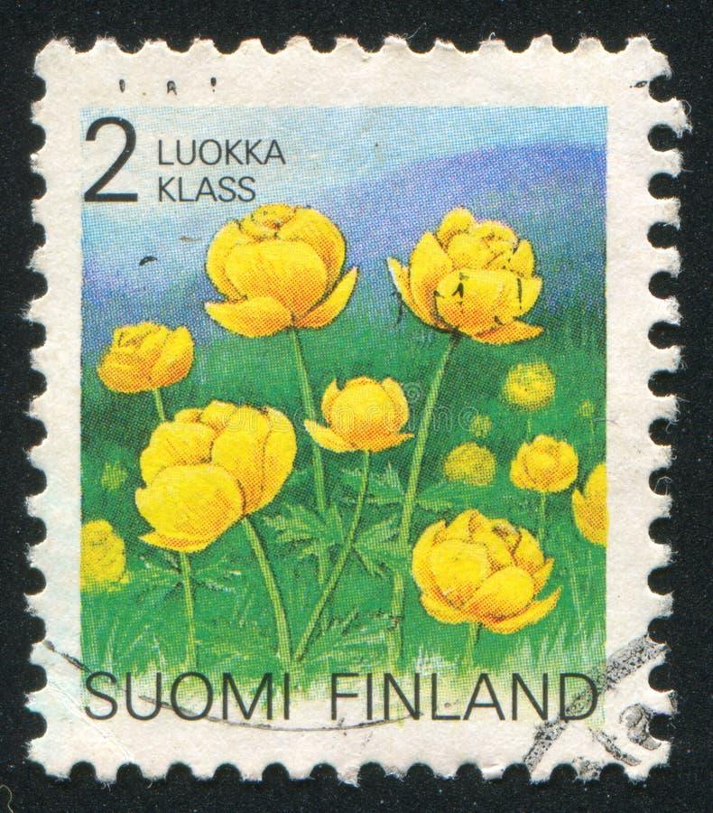 Globeflower royalty-vrije stock foto's