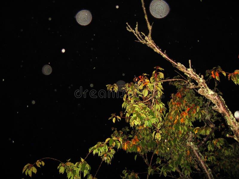 Globi di energia sopra un albero alla notte immagine stock libera da diritti