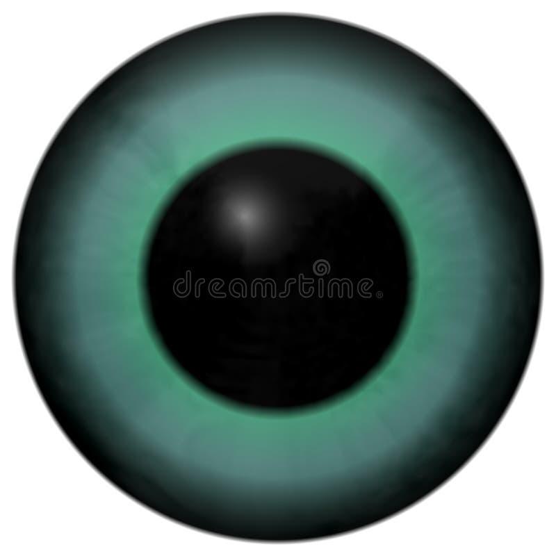 Globo del ojo del verde azul con la ronda negra stock de ilustración
