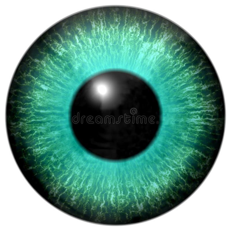 Globo del ojo del verde azul con la ronda negra ilustración del vector