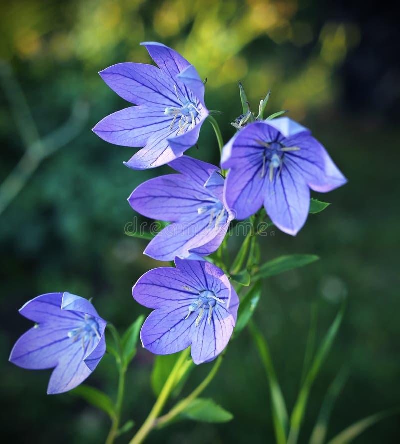 Globo  flores foto de archivo libre de regalías