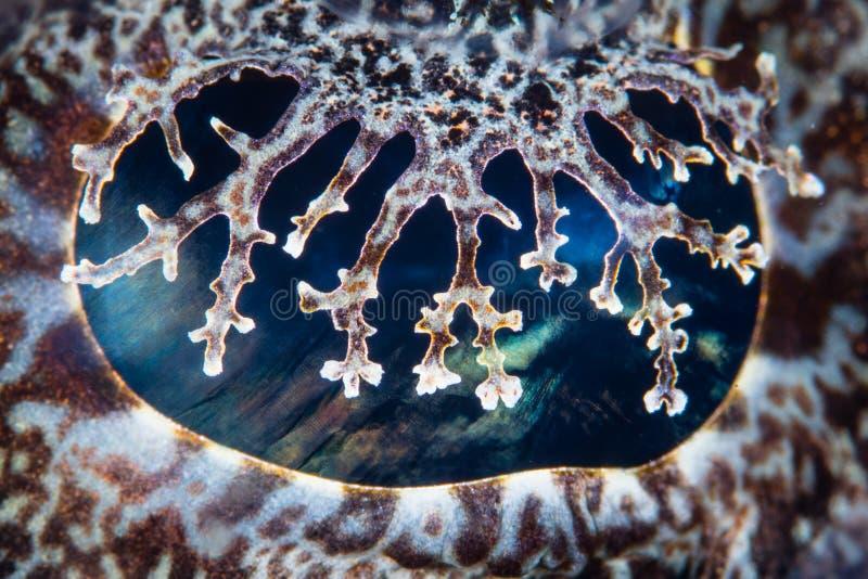 Globo ocular de Crocodilefish fotos de stock