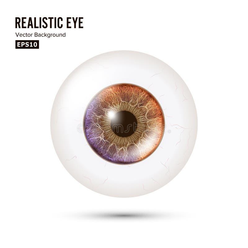 Globo ocular realístico da foto Retina humana Vector a ilustração do olho 3d lustroso humano com sombra e reflexão Front View ilustração royalty free