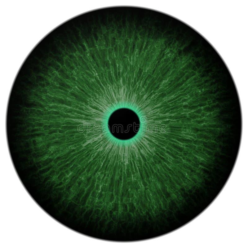 Globo ocular verde do gato com o aluno redondo, preto claro e fundo branco isolado ilustração royalty free