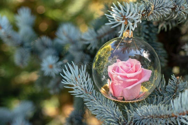 Globo rosado eterno de las rosas imagen de archivo libre de regalías