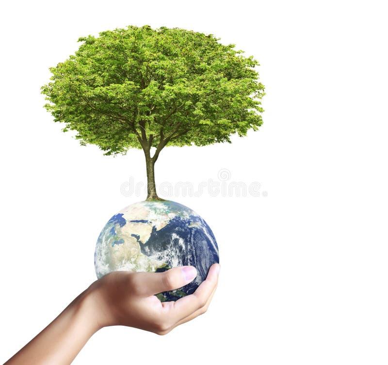 Globo y árbol de la tierra en su mano fotografía de archivo