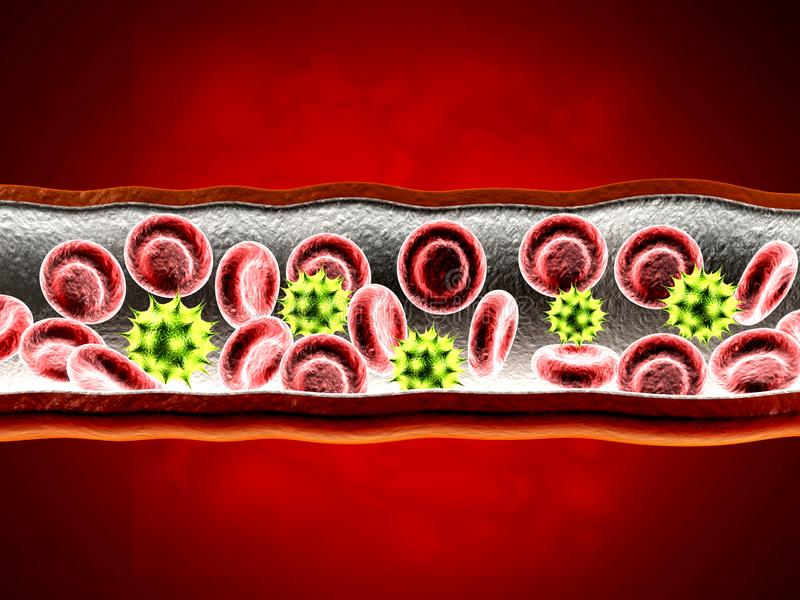 Globules rouges avec le wain illustration libre de droits