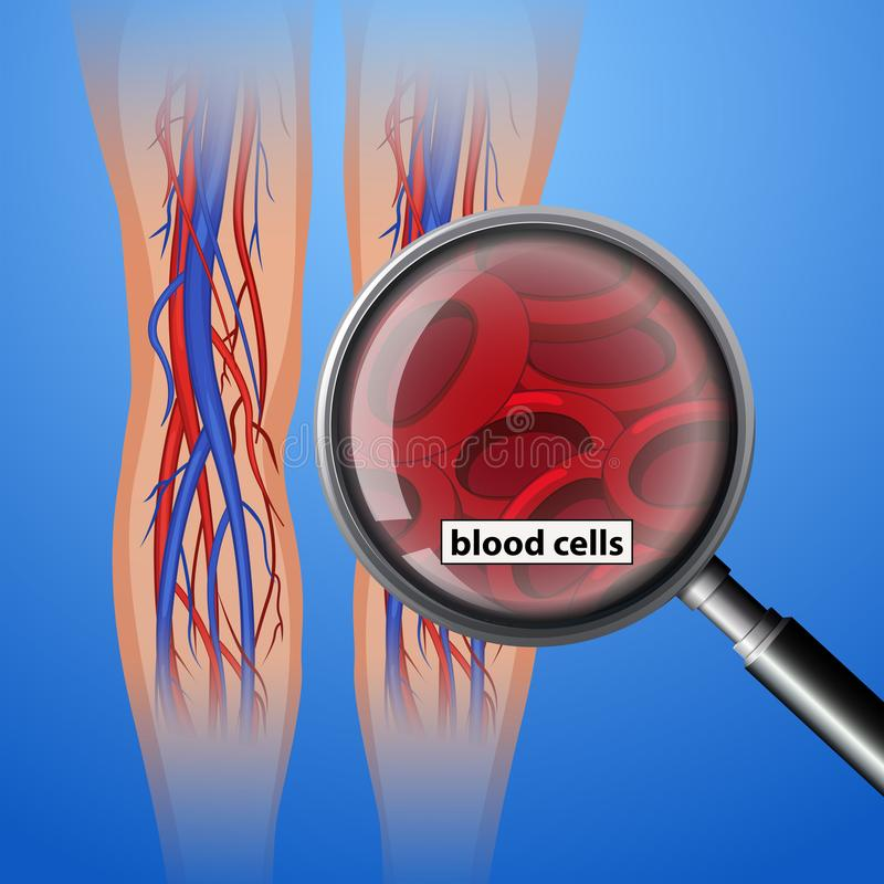 Globules sanguins antomy humains illustration libre de droits