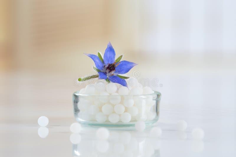 Globuli di omeopatia con il fiore della borragine fotografia stock