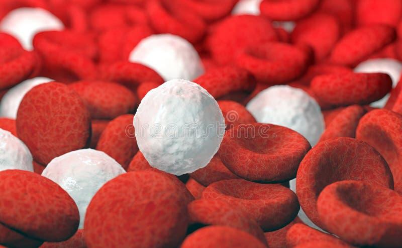 Globuli rossi e bianchi illustrazione di stock
