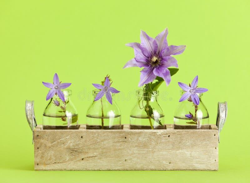 Glockenblume und Klematis blühen im Behälter mit kleinen Flaschen lizenzfreies stockfoto