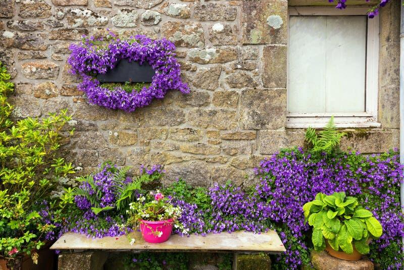 Glockenblumeblumen auf Granithausmauer lizenzfreie stockfotografie