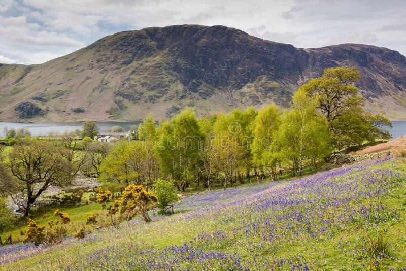 Glockenblumen bei Rannerdale im englischen See-Bezirk stockbild