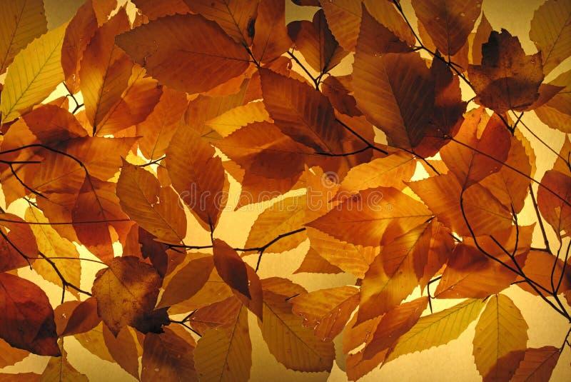 Gloeiend Autumn Leaves stock afbeeldingen