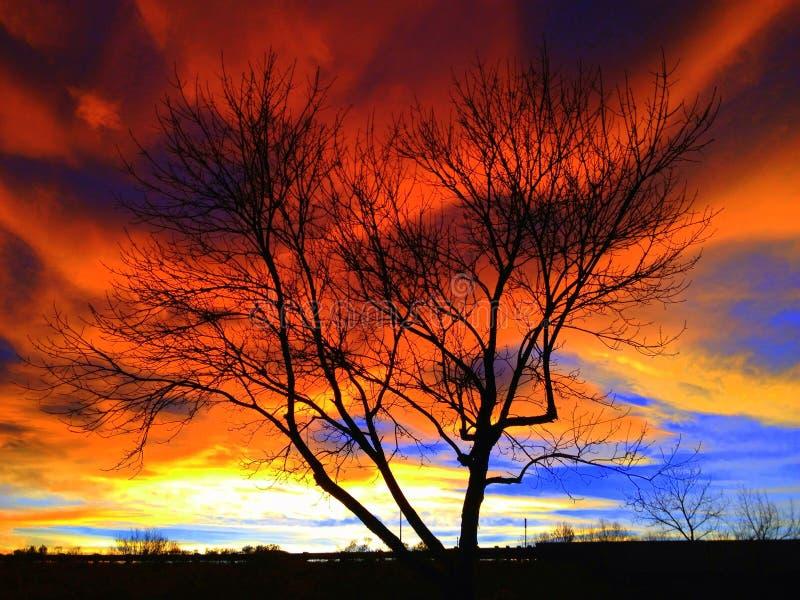Gloeiende boom stock afbeelding