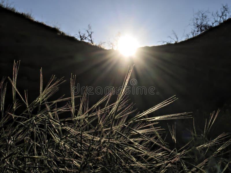 Gloeiende Grassen bij Dageraad met Zonsopgang en Stralen stock foto