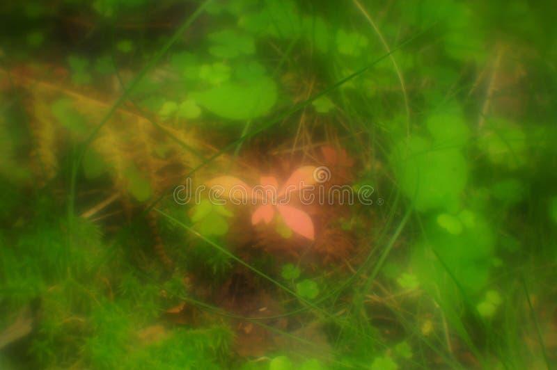 Gloeiende installatie in een magisch bos royalty-vrije stock afbeelding
