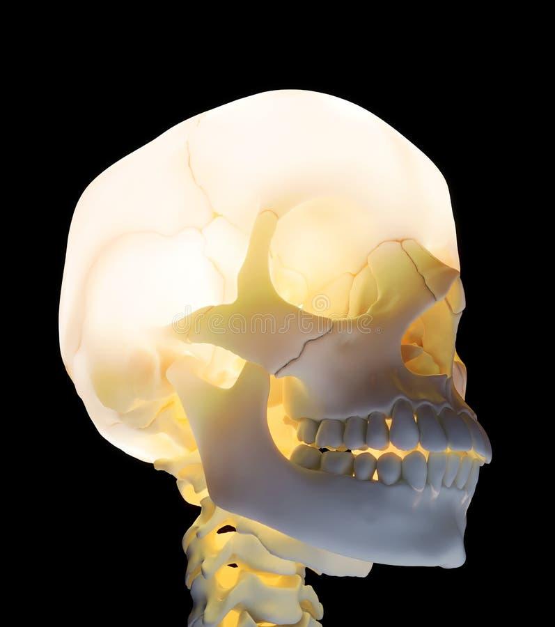 Gloeiende schedel stock foto's