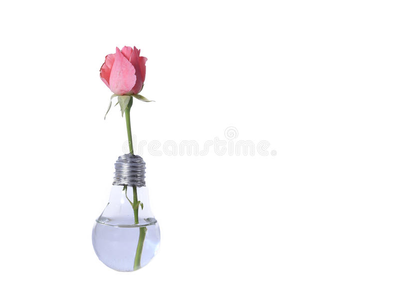 Gloeilamp met roze bloem stock fotografie