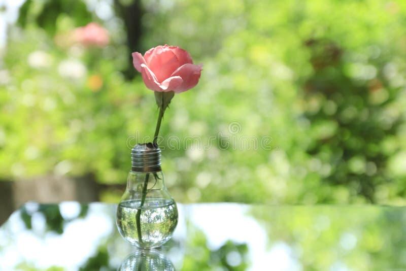 Gloeilamp met roze bloem in aard stock afbeeldingen