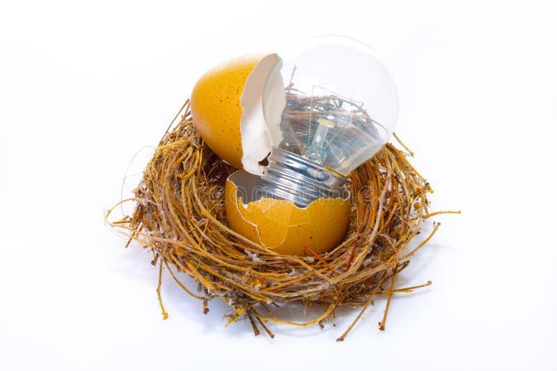 Gloeilamp op een Vogel` s Nest op Wit royalty-vrije stock fotografie