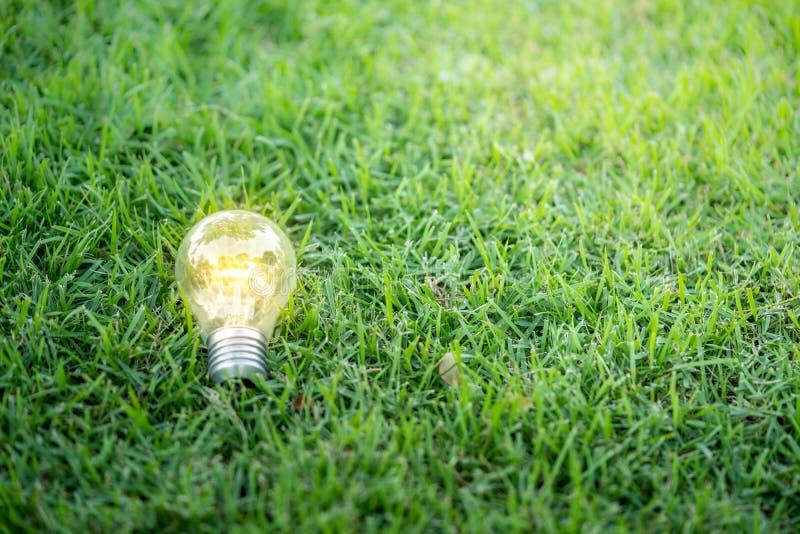Gloeilamp op groen gras met schoonheids bokeh achtergrond royalty-vrije stock foto's