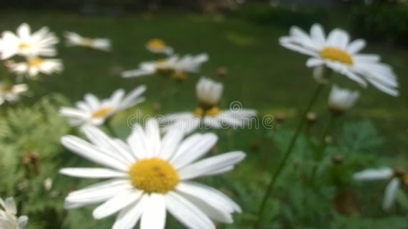 Gloire blanche photographie stock libre de droits