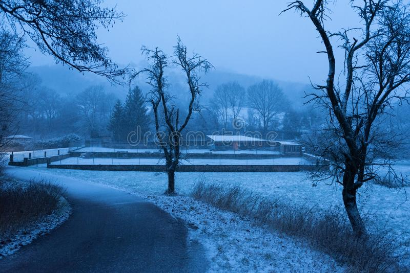 Road and two trees in snowy country side at dusk stock photo