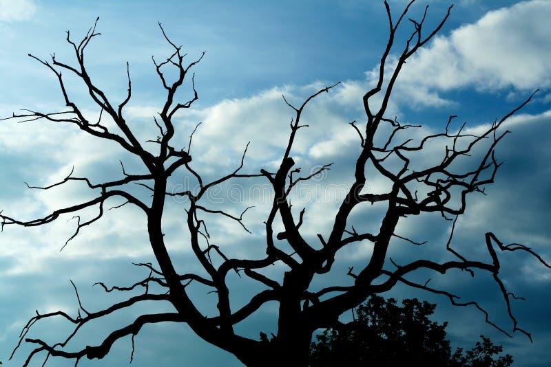 Gloomy dead tree royalty free stock photo