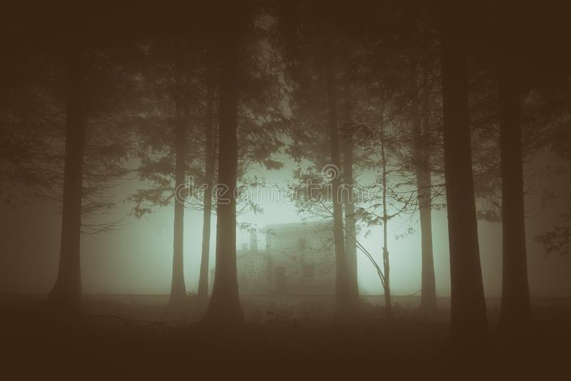 Gloomy forest with fog and house royalty free stock photo