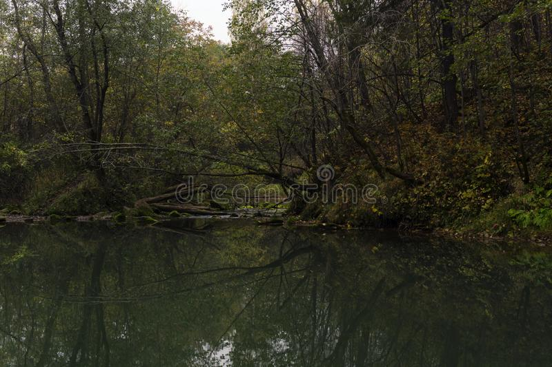 Gloomy forest lake royalty free stock images