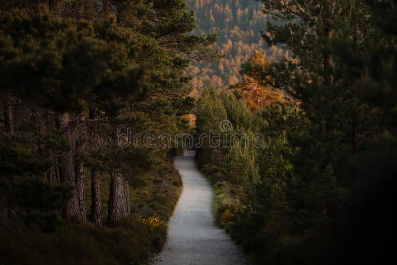 Gloomy path in pine tree woods. Empty forest path in the woods of the Cairngorms National Park, Scotland stock photos