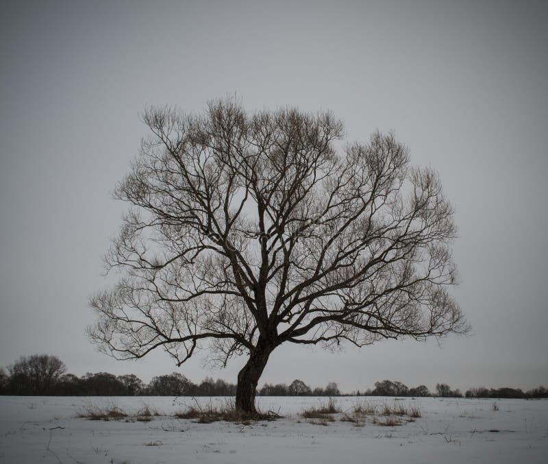 Gloomy tree stock images