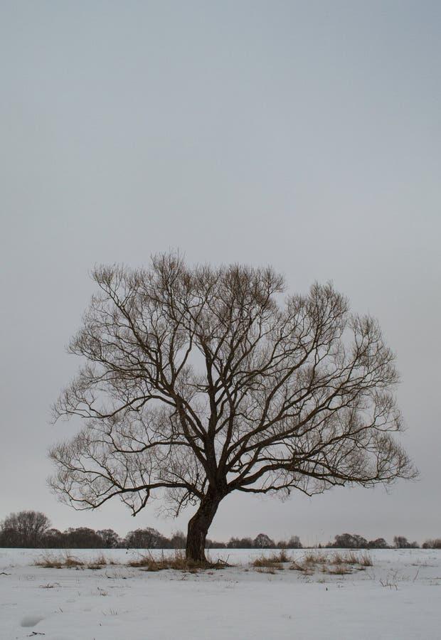 Gloomy tree stock image