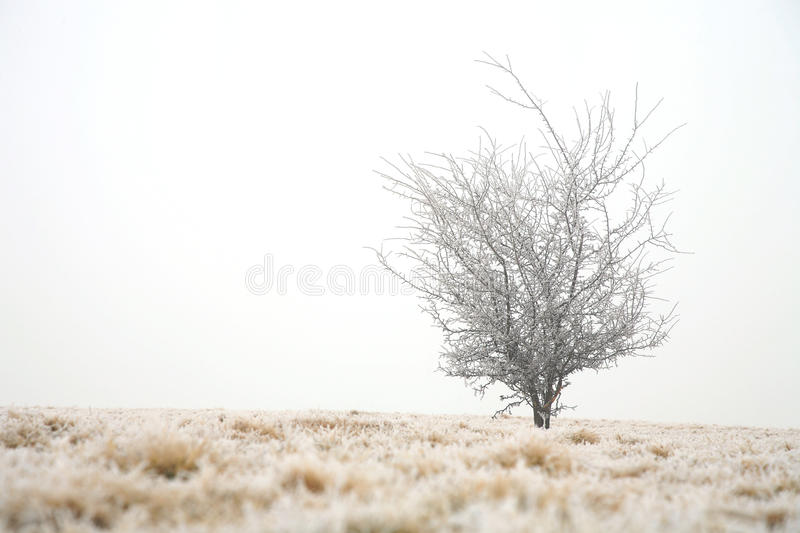 Download Gloomy winter day stock photo. Image of covered, cloudy - 18408332