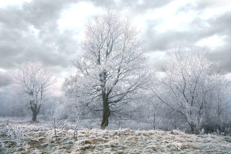 Download Gloomy winter day stock photo. Image of scenery, freeze - 22644956