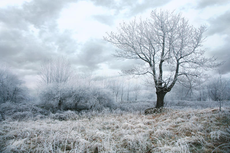 Download Gloomy winter day stock photo. Image of freeze, firs - 22645266