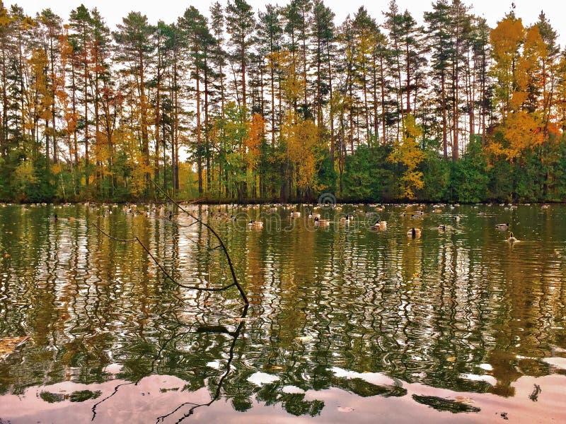 Gloria dorata dell'autunno immagini stock libere da diritti