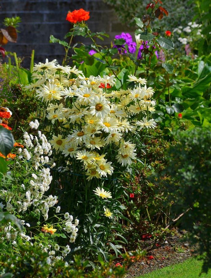 Glorierijke bloemen in een zonnige hoek van een tuin van het land stock foto