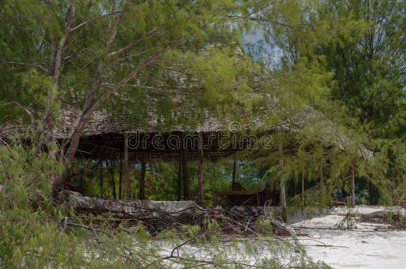 Glorieta en los arbustos en la playa África, Zanzíbar - febrero de 2019 fotos de archivo libres de regalías