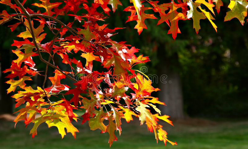 Download Glorious fall stock image. Image of macro, isolated, close - 2782439