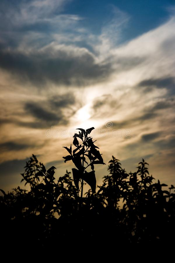 Glorious flower with dramatic sky royalty free stock photos