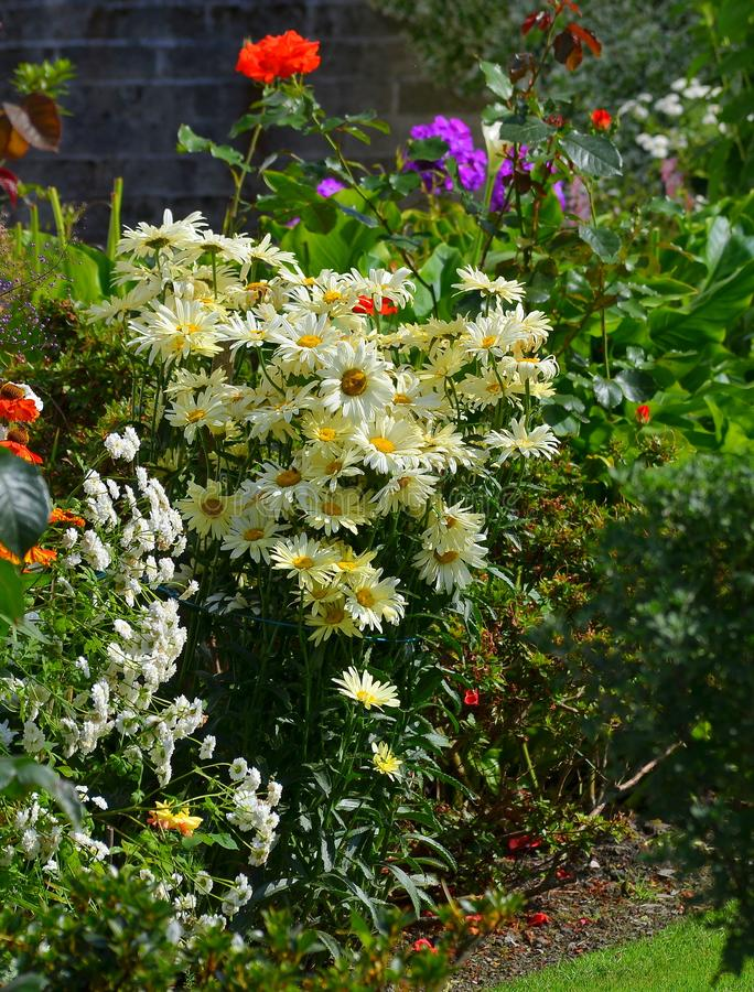 Glorious flowers in a sunny corner of a country garden. stock photo