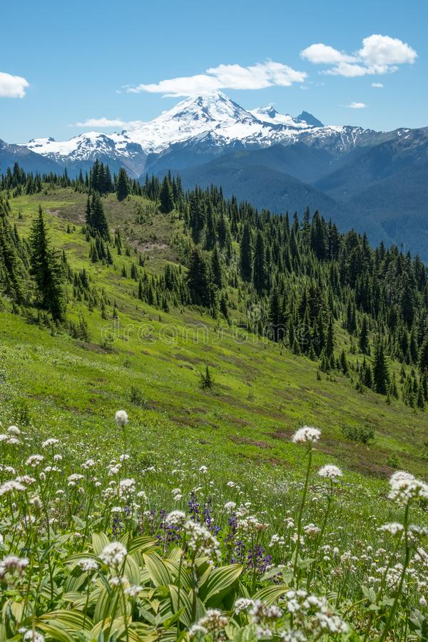 Glorious Mount Baker with foreground of lush, flowering alpine meadows. Mount Baker on a mostly sunny day from the lush, flowering alpine meadows of High Divide stock images