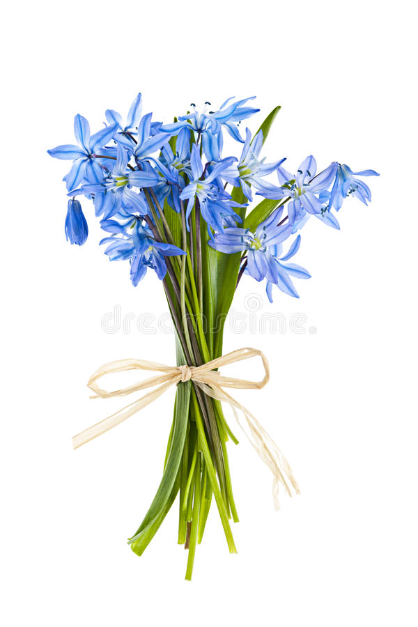 Blue Spring Flowers Royalty Free Stock Images